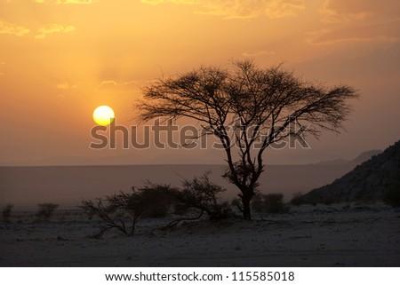 Sunset in the Sahara Desert - stock photo
