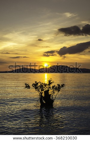 Sunset in the seascape with mangrove tree - stock photo
