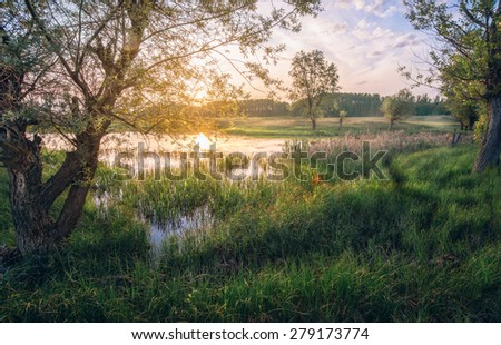 Sunset in the swamp - stock photo