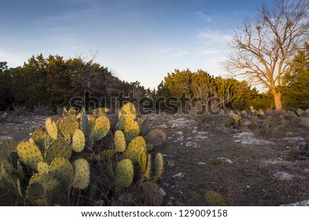 Sunset in the Texas Hill Country, with cedar and mesquite trees, and plenty of rocks and cactus.