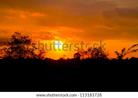 sunset in the tropics with trees - stock photo
