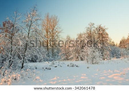 Sunset in the winter forest. Rime on the trees. Cold winter day at sunset. Frost and snow on the branches. Beautiful winter nature. Panorama of the winter forest. Winter landscape. Snow fairy forest. - stock photo