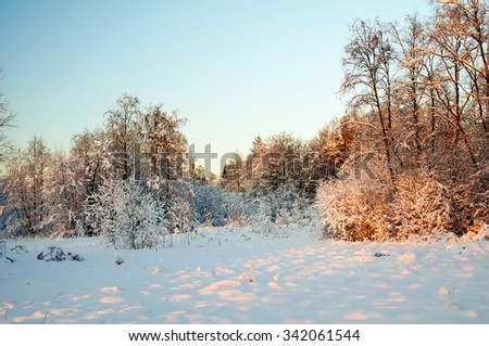 Sunset in the winter forest. Rime on the trees. Cold winter day. Frost and snow on the branches. Winter nature. Panorama of the winter forest. Winter landscape. Snow fairy forest. Pink rays of the sun - stock photo