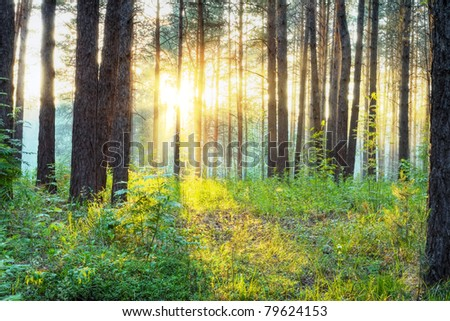 sunset in the woods - stock photo