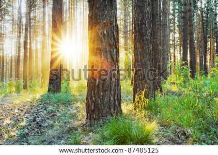 sunset in the woods, hdr photo - stock photo