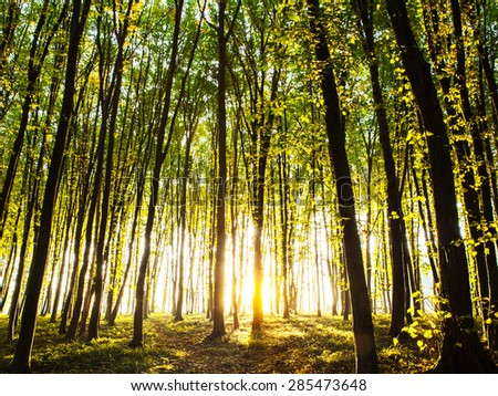 sunset in the woods. nature - stock photo