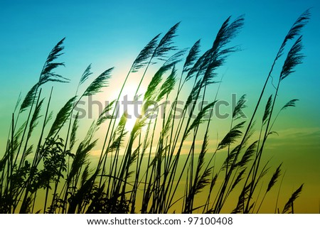 Sunset Lake Plant in blue - stock photo