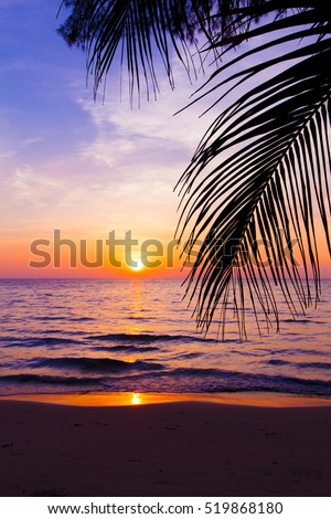 sunset landscape. beach sunset.  palm trees silhouette on sunset tropical beach