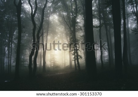 sunset light in dark forest background - stock photo