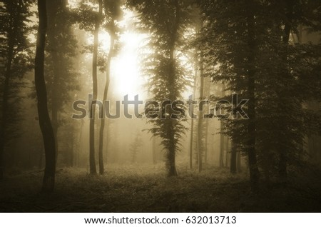 sunset light in fantasy forest with trees in mist