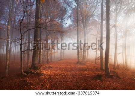 Sunset light in the misty autumn forest - stock photo