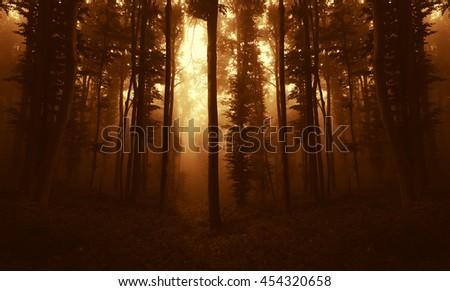 sunset light in woods in autumn - stock photo