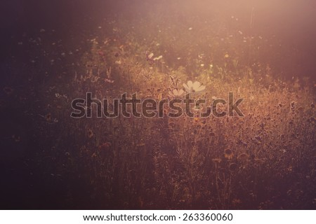 sunset light on a field of wild flowers, abstract springtime bacground - stock photo
