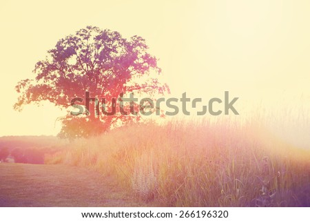 Sunset meadow. Instagram effect. - stock photo