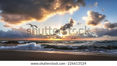 Sunset on Miami Beach with two flying seagulls - stock photo