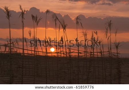 Sunset on Socotra, reed fence on foreground