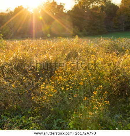 Sunset on summer  flowers meadow. Soft focus, Lens flare. - stock photo