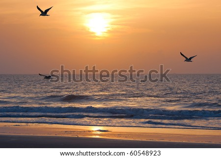 Sunset on the atlantic ocean. Florida, USA