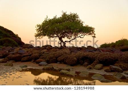 Sunset on the Goa beach, India - stock photo