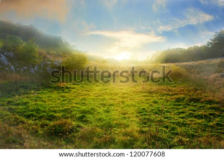 Sunset on the green field with grass and trees - stock photo