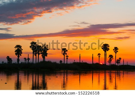 sunset on the lake manze in africa - national park selous game reserve in tanzania - stock photo