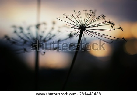 Sunset on the nature of the backlight landscape - stock photo