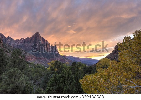 Sunset on the Watchman mountain with a yellow Autumn Cottonwood tree in the foreground in Zion National Park, Utah - stock photo