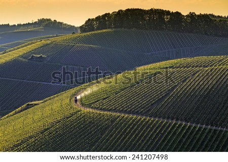Sunset or sunrise over vineyard with a tractor working on curved path, late warm afternoon light in summer - stock photo
