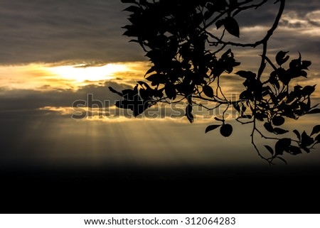 Sunset or sunrise with tree branch