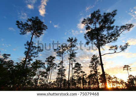 Sunset over a forest in the Everglades National Park of Florida - stock photo