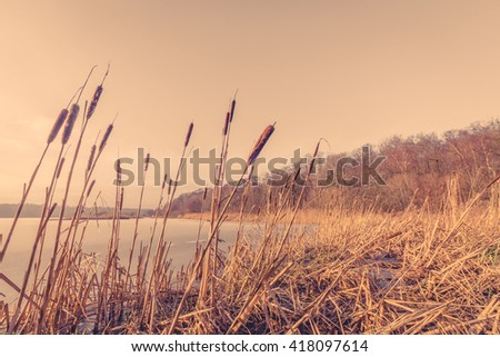Sunset over a frozen lake with reeds - stock photo