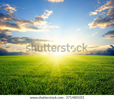 Sunset over a green field