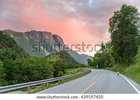 Sunset over a mountain road in Norway - orange skies, road into the mountains, a tiny sheep on the road
