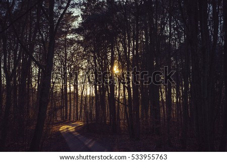sunset over a road through forest