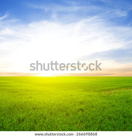 sunset over a spring fields - stock photo