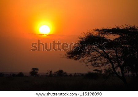 Sunset over African Savannah with tree in foreground. Beautiful scene from Serengeti National Park - stock photo