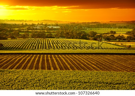 Sunset over Barossa Valley vineyards South Australia - stock photo