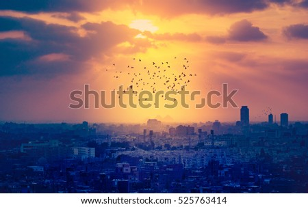 Sunset over Cairo with silhouettes of flying birds and Egyptian pyramids on a horizon. Mystical cityscape of Egypt - ancient town with flocks of pigeons flying in rays of sundown.