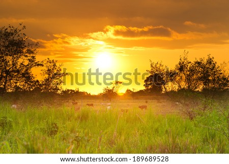 Sunset over Esmeralda province in northen Ecuador - stock photo
