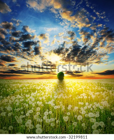 Sunset over field with alone tree and flowers