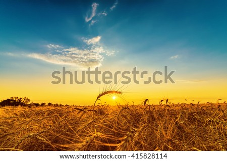 sunset over field with harvest - stock photo