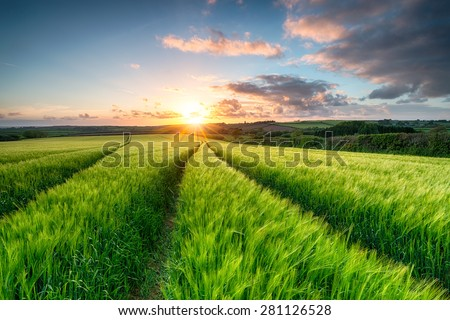 Sunset over fileds of ripening barley near Wadebridge in Cornwall - stock photo