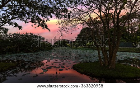 Sunset Over Lotus Pond in Battaramulla