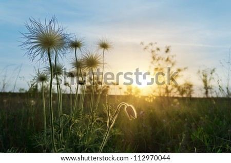 sunset over meadow with flowers - stock photo