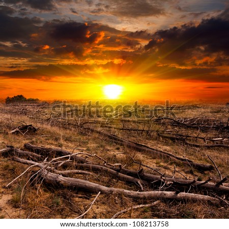 sunset over old dead trees on meadow