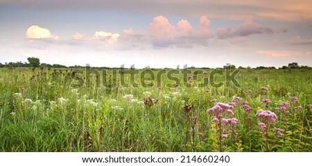 Sunset over prairie wildflowers at Springbrook Prairie Nature Preserve, DuPage County, Illinois. - stock photo