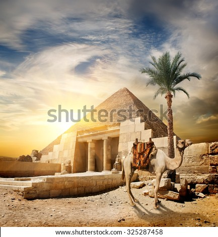 Sunset over pyramid and camel in desert - stock photo