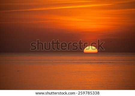 Sunset over sea at Brighton in Sussex, with cloud and gulls. - stock photo