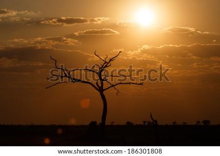 Sunset Over The Chobe National Park, Botswana, Africa - stock photo