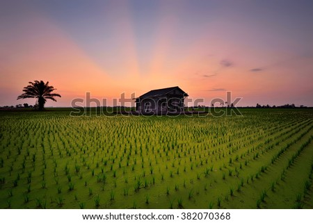 Sunset over the green paddy field with abandoned house. Nature composition.